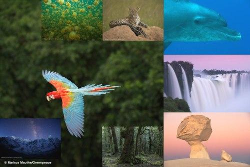 Greenpeace präsentiert neue Multivisionsshow Naturwunder Erde (Foto: Markus Mauthe/Greenpeace)
